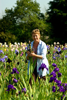 Claire Austin Nursery; irises