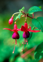 FUSCHIA;PHOTOGRAPHER MICHELLE GARRETT