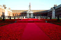 5000 Poppies Project, Chelsea Flower Show 2016