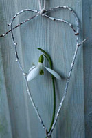 snowdrop and twig heart