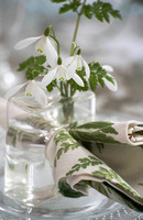 SNOWDROPS STYLED; PHOTOGRAPHER JACKY HOBBS