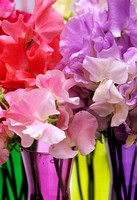 SWEET PEAS;PHOTOGRAPHS MICHELLE GARRETT