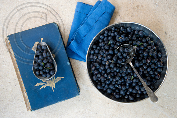 PREPPING SLOES