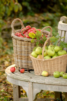 harvested apples