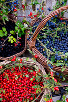 BASKETS OF HEDGEROW BERRIES