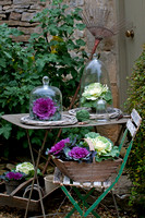 ORNAMENTAL CABBAGES;PHOTOGRAPHER MICHELLE GARRETT